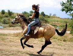 конный клуб Сергиев Посад