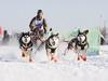 В Сергиево-Посадском районе пройдут гонки на собачьих упряжках