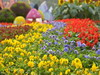 В Сергиевом Посаде пройдет областной фестиваль цветов