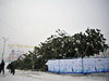 В Хотькове шквальный ветер повалил главную городскую елку