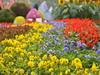 В Сергиевом Посаде пройдет конкурс цветников