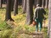 Лучше всего грибы в МО собирать в Сергиево-Посадском районе – Минкульт