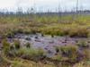 В Сергиево-Посадском районе будут охранять болото
