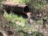 В Сергиевом Посаде «коммунальщики» сливали канализационные стоки в лес