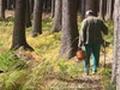 В Сергиево-Посадском районе потерялся грибник